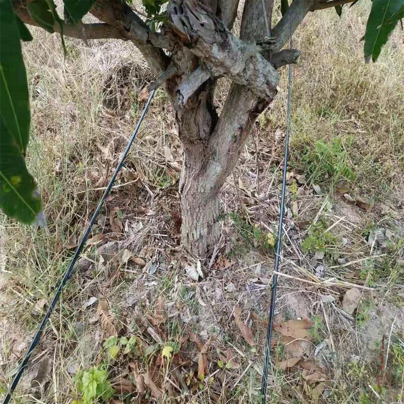 海南果园灌溉工程